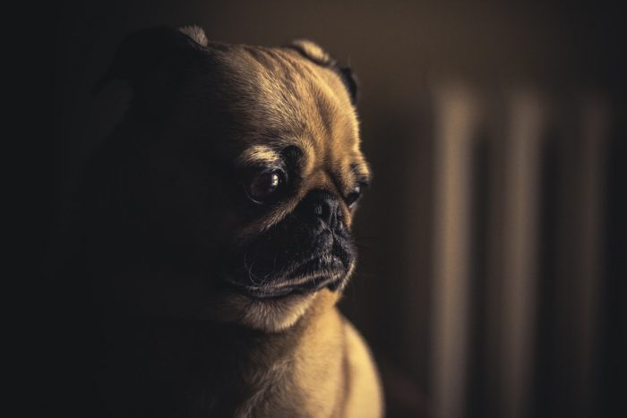 Pug pug